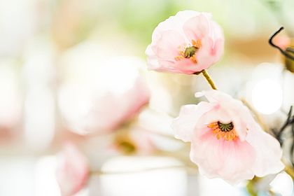Livios Floristik in Hainburg an der Donau - Ihre Blumen für Ihre Hochzeit Beispiel 1