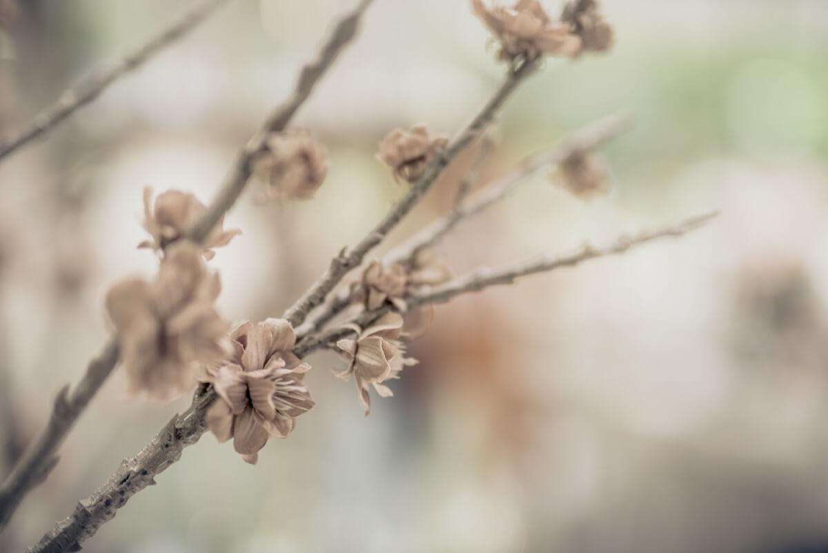 Livios. Gartencenter. Café. Bar. Restaurant. - Nicht nur Blumen im Gartencenter. Finden Sie wunderbare Dekoartikel aus einer erlesenen Selektion!
